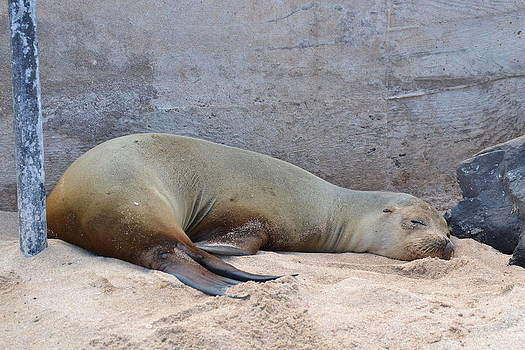 Sleepy Day by Jennifer Kelly