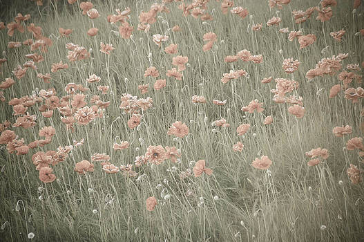 Sleepy Field by Tingy Wende
