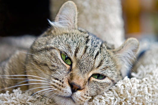 Sleepy Green Eyes by Susan Leggett
