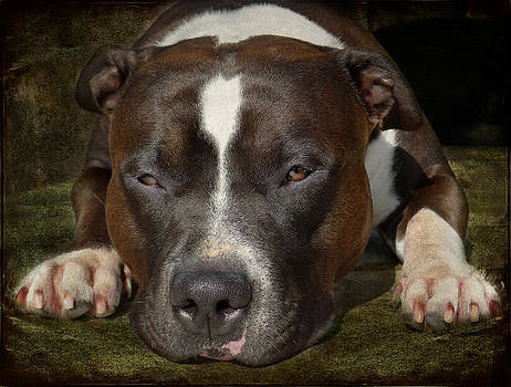 Larry Marshall - Sleepy Pit Bull