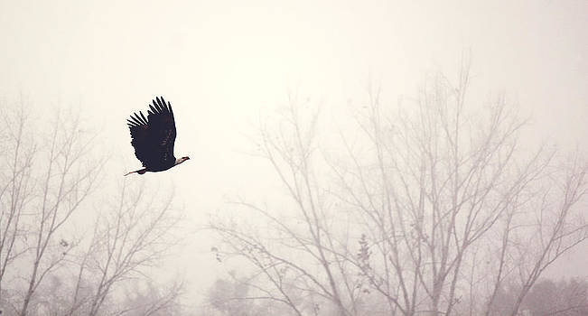 Slicing through the Fog by Melanie Lankford Photography