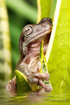 Simon Bratt Photography LRPS - Small frog on a plant