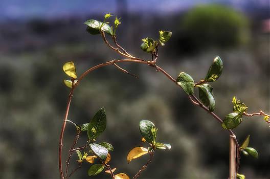 Small Leaves by Leonardo Marangi