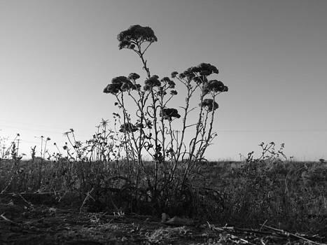 Small Trees by Franshisca Delgado