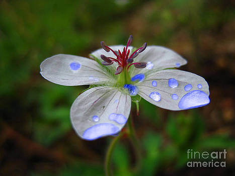 Small White Flower by Karisa Kauspedas