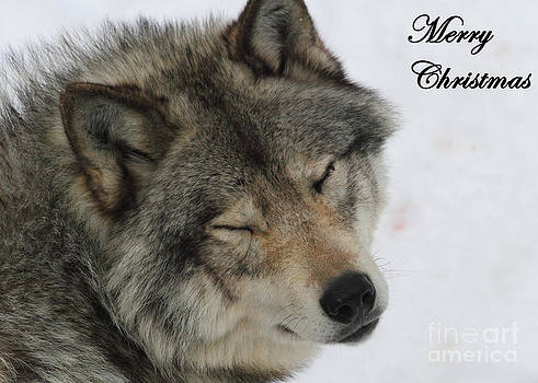 Smiling Timber Wolf Greeting Card by Deanna Wright