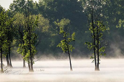 Smoke On The Water by Debbie Patrizi