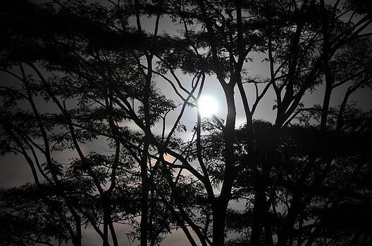 Smokey Moon by Jose Diogo