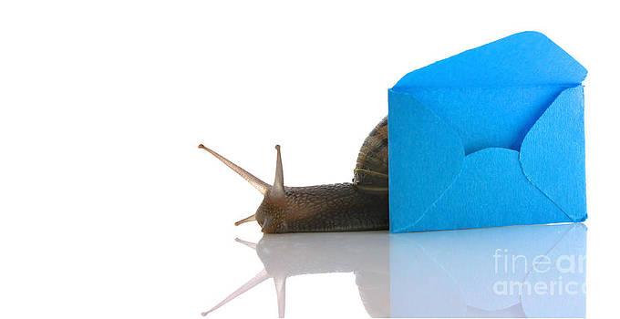 Simon Bratt Photography LRPS - Snail next to miniature mail envelope
