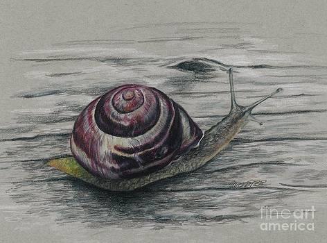 Snail study by Meagan  Visser