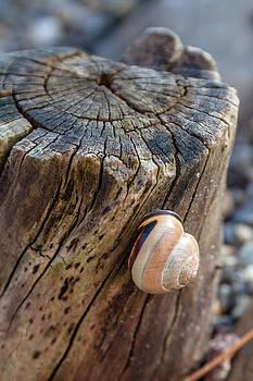 Snailshouse #1 by Bjoern Vilcens