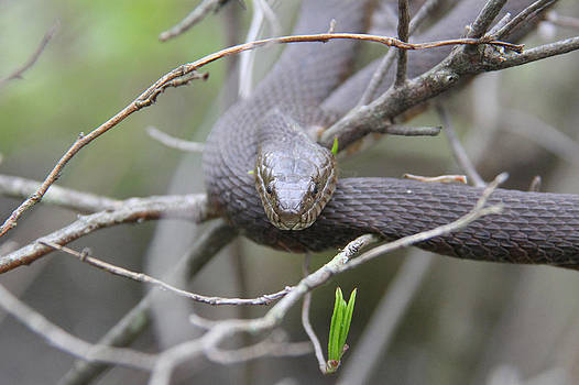 Adrienne Franklin - Snake