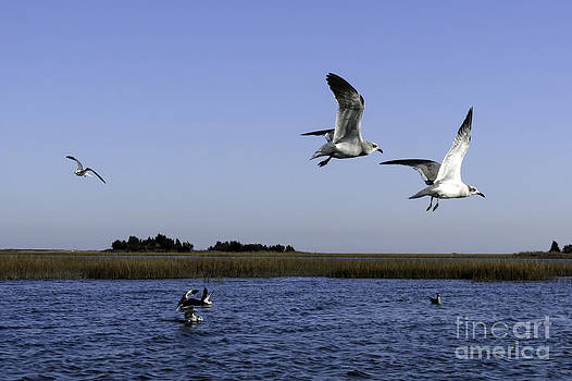 Sneeaky Segulls by Crissy Anderson