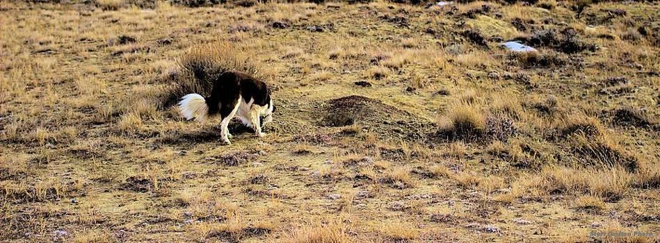 Sniffing the Prairie by Scott Carlton