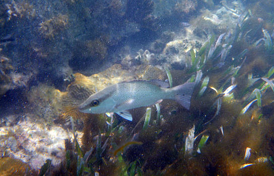 Snorkeling in the Tortugas by Greg Graham