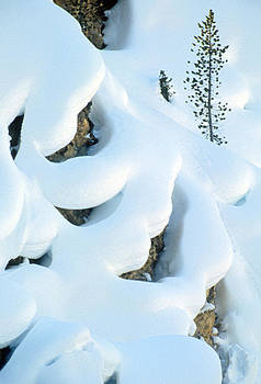 Snow and Tree by Judi Baker