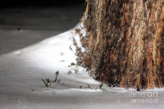 Snow at the Roots by Joan Bertucci