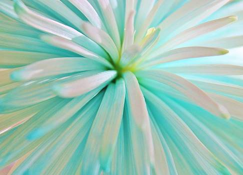Snow Blue  by Free Artist