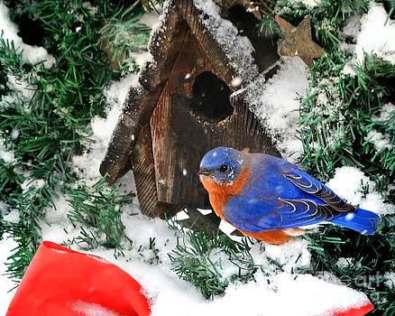 Snow Bluebird Christmas Card by Nava Thompson