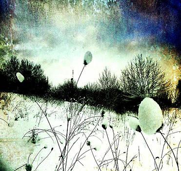Snow Burs by Florin Birjoveanu