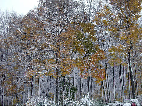 Snow Colored Trees in the Woods by Ken Branch