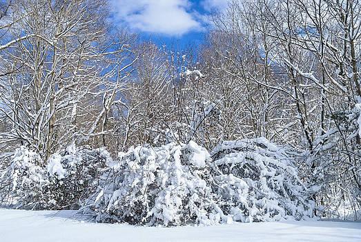 Snow Covered Meadow by Andrew Kazmierski