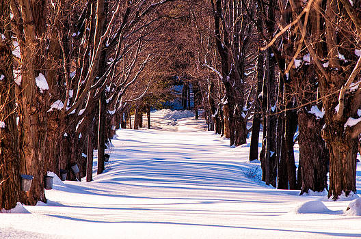 Snow covered way by Lee Costa