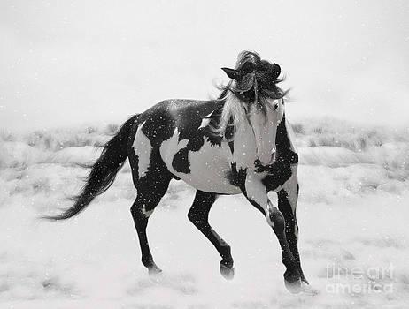 Snow Dancer by Lynn Jackson