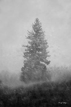 Snow Day by Darryl Gallegos