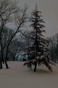 Carolyn Stagger Cokley - snow day hued
