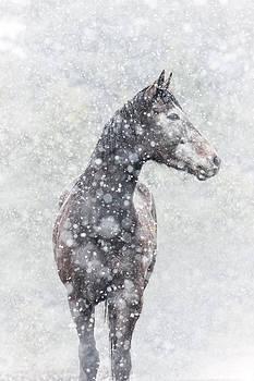 Snow Flurry by Pamela Hagedoorn