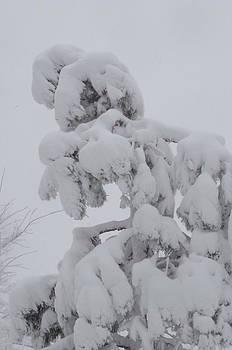 Snow Goon by Martin Bellmann