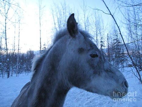 Snow Horse Whisperer  by Elizabeth Stedman