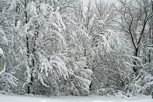 Snow by Joan Powell
