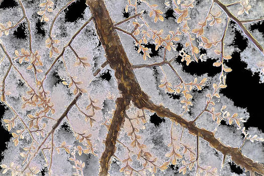 Barry Jones - Snow Laden Branches - Natural Abstract