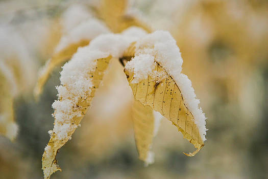 Snow Leaves by Brian Sevald