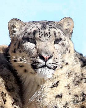 Snow Leopard Portrait by Deborah  Smith