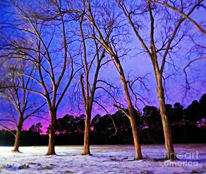 Snow Lined Trees in a Carolina Sunset by Lisa Jones