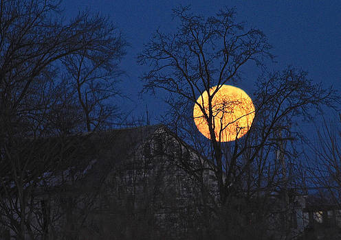 Snow Moon by Donna Quante