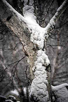 Snow on the Birch by Charlene Palmer