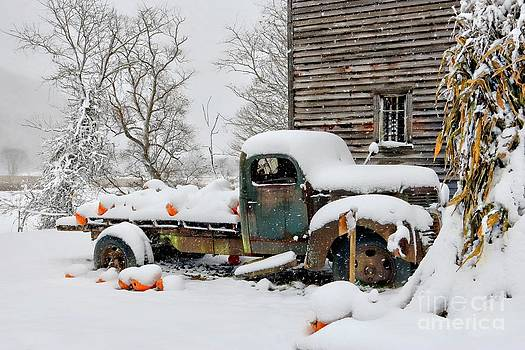 Snow on the Pumpkin Harvest by Benanne Stiens