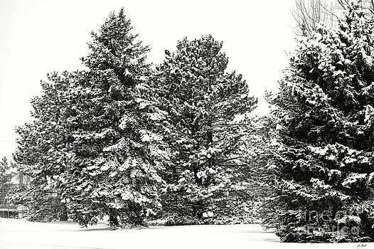 Jon Burch Photography - Snow on the Trees
