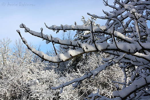 Anne Babineau - snow still