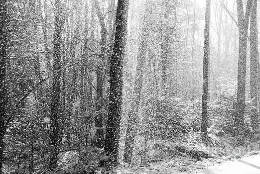 Snow Storm by Sue OConnor