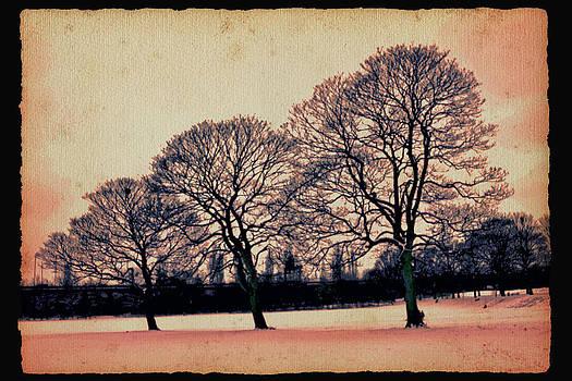 Snow trees by Nadeesha Jayamanne