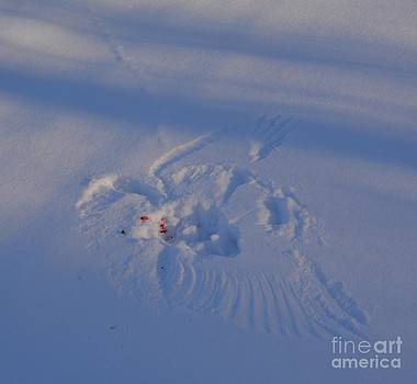 Snowbird 0107 by Alan Homka
