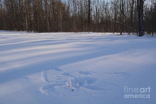 Snowbird 0113 by Alan Homka