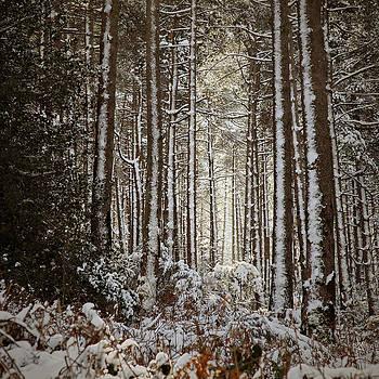 Snowed Forest by Antonio Jorge Nunes