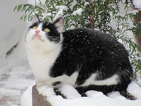 Snowed In by Halyna  Yarova