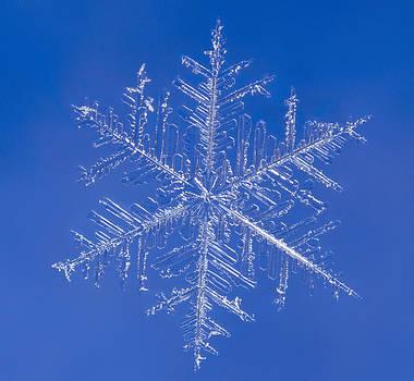 Tom Biegalski - Snowflake 2